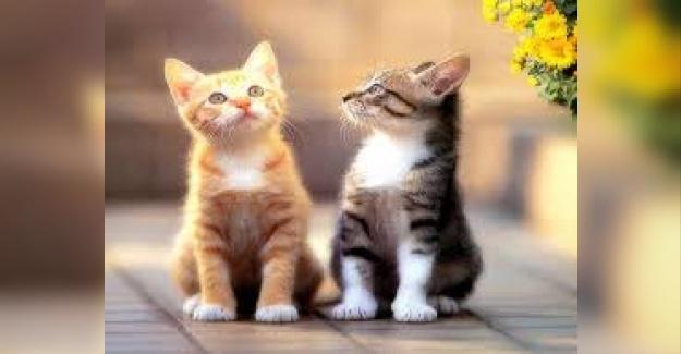 Kedi İsimleri Nasıl Seçilmeli?