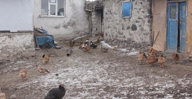 Ağrı'da İki Köyde Kuş Gribi Alarmı