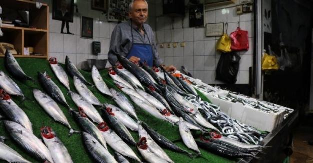 Karadenizli Balıkçıların Palamut Mutluluğu