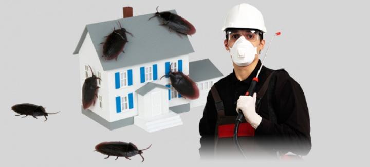 İstanbul Büyükçekmece Böcek İlaçlama