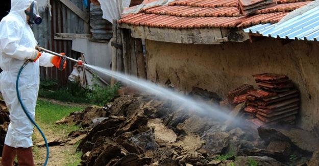 Artemis İstanbul Fare ve Hamam Böceği İlaçlama Hizmetleri