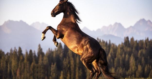 Atlar Hakkında Tüm Merak Ettikleriniz Bir Arada