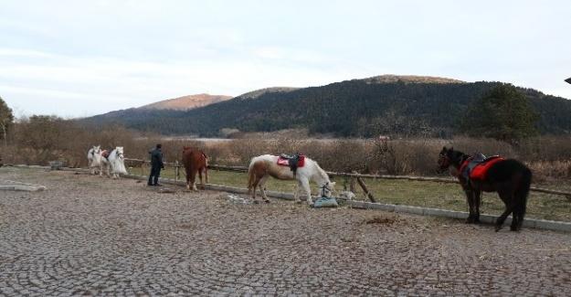 Abant'ta ruam şüphesi olan atların sahiplerine de test yapıldı