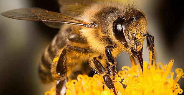 Bolu'da tarla işçileri arıların saldırısına uğradı