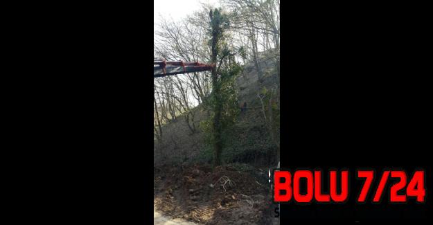 Bolu'da Devrilen Ağaç Vinçle Kaldırılıp Dikildi