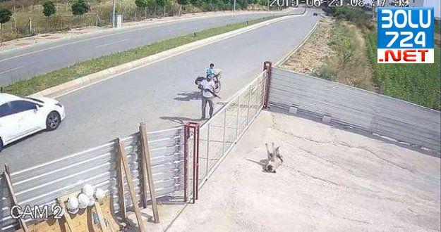 Edirne'de Pompalı İle Köpeği Öldüren İNSAN'a Şok Edici Ceza