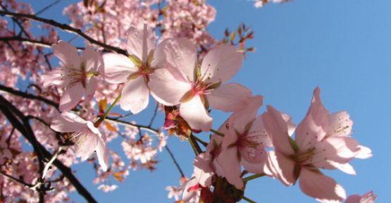 İlkbaharın İlk Günü 21 Mart /  İlkbahar Ekinoksu Nevruz Nedir 2015