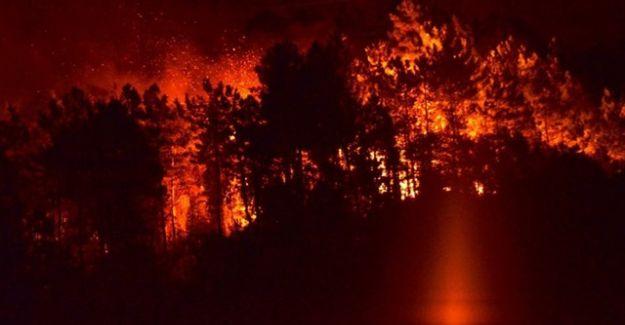 Sürmene'de Çıkan Büyük Yangın Kontrol Altına Alındı