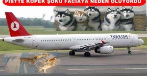 Uçak İnecekken Pilot Köpekleri Gördü FACİANIN Eşiğinden Dönüldü