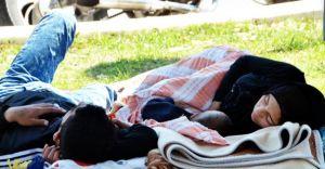 Bodrum'da Park ve Bahçelerde Göçmen Şoku!