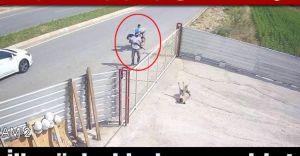 Pompalı Tüfekle Köpeği Öldüren Şahsın İfadesi Kan Dondurdu!