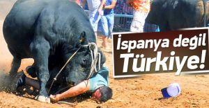 Burası İspanya Değil Türkiye! Boğa Sahibine Saldırdı İşte O ANLAR
