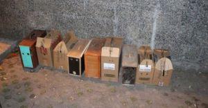 Kanatlı Hayvan Derneğinden Horoz Dövüştürücülere Baskın (Görüntülü haber)