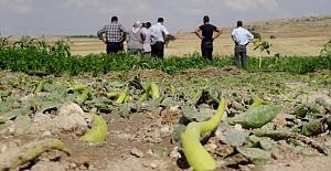 Aksaray'da Dolu Yağışları Ekili Tarım Arazilerini Olumsuz Etkiledi