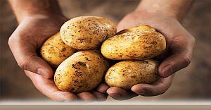 Patates Fiyatı Yarı Yarıya Düşecek 5 Liradan 2 Liraya...