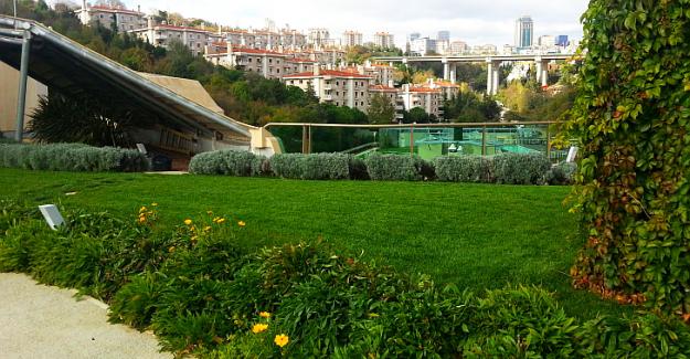 Yeşil çatı sistemleri