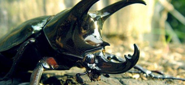 Bakanlıktan Gergedan Böceği Açıklaması! Parasal Olarak...!