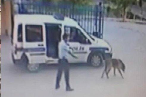 O Polis Yine Gündemde! Daha Önce Köpeği Vurmuştu Be Kez de..!