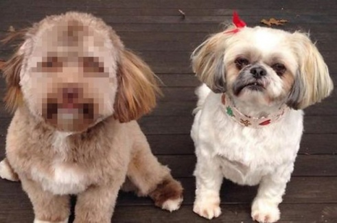 İnsan Yüzlü Köpek Görenleri Şaşırttı