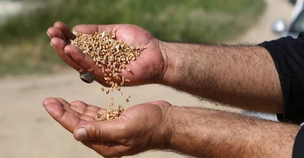 Yerel Bitkilere Ait 115 Bin Tohum Bakanlık Korumasında