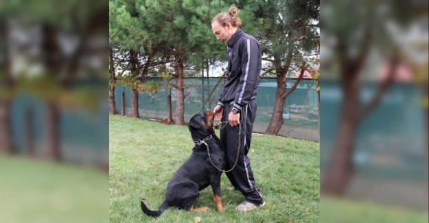 Köpek Pansiyonunda Ne Tür Hizmetler Bulunur?