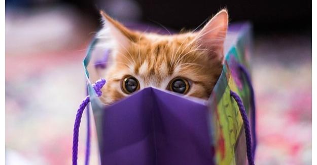 Kedi Ürünleri (Bakım ve Sağlık, Tasmaları, Taşıma Çantaları) Alırken Nelere Dikkat Edilmeli?