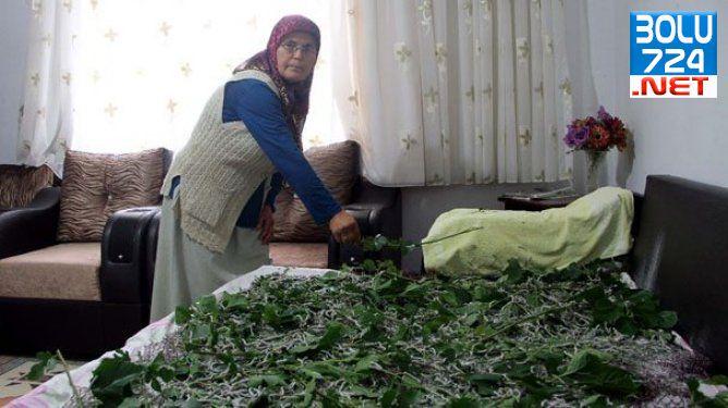 Samsun'lu Fatma Bayram Evinde Öyle Birşey Yetiştiriyor ki Gören Eve Gidiyor