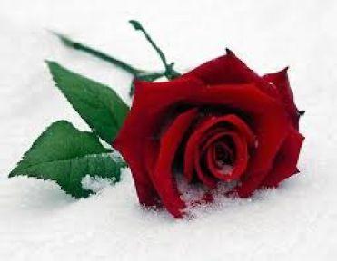 Güzel  ve Anlamlı Aşk Mesajları (Sevgiliye Söylenecek Aşk Sözleri)
