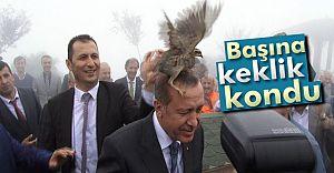 (VİDEO HABER) Cumhurbaşkanı Erdoğan'ın Başına KEKLİK Kondu!
