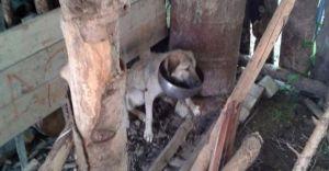Bolu'da İnanılmaz Olay! Bakın Köpeğe Ne Yaptılar!!