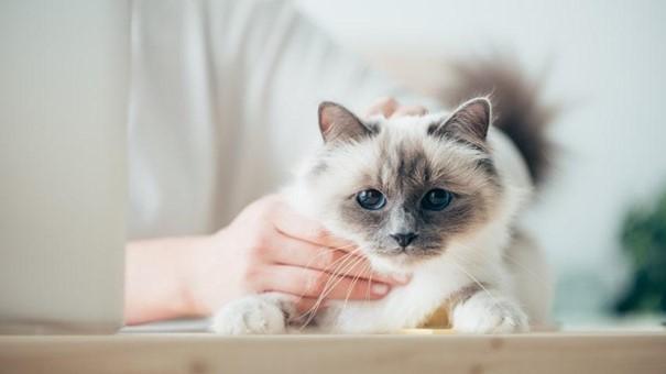 kedi, iç mekan, oturma, evcil kedi içeren bir resimAçıklama otomatik olarak oluşturuldu