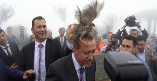Erdoğan'ın başına keklik kondu